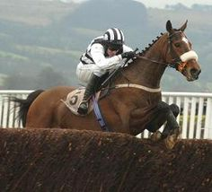 One of my all time favourites, Irish champion 2 mile chaser Moscow Flyer, with Barry Gerraghty on board. Prone to the odd mistake, if he stayed on his feet he usually won. Irish Racing, Horse Profile, Sport Of Kings, Best Flats, Racehorse, Free Tips, Thoroughbred, Horse Racing, Moscow