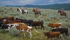 Montana cattle drives just for the gals! Girlfriend getaways on horseback.