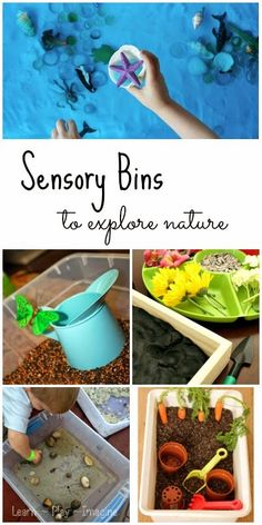 50 sensory bins to explore nature Sensory Tubs, Sensory Boxes, Sensory Activities, Sensory Play, Learning Activities, Preschool Activities, Kids Learning, Kindergarten, Spring Activities