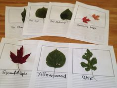 Amazing post and instructions on making a leaf journal with your kids this fall - even includes ideas for leaf identification apps!