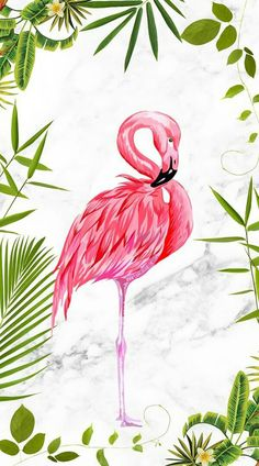 Flamingo discovered by on We Heart It Flamingo Wallpaper, Summer Wallpaper, Cute Wallpaper Backgrounds, Wallpaper Iphone Cute, Cute Wallpapers, Flamingo Painting, Flamingo Art, Pink Flamingos, Greater Flamingo