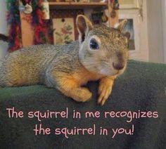 Haha my spirit animal Secret Squirrel, Squirrel Girl, Cute Squirrel, Squirrels, Ninja Squirrel, Squirrel Feeder, Raccoons, Baby Animals, Funny Animals