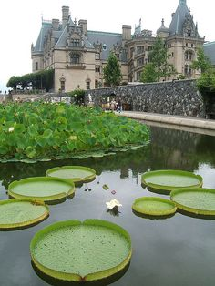 Water garden at the Biltmore Estate, North Carolina