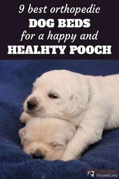 9 Best Orthopedic Dog Beds for a Happy and Healthy Pooch - Two white puppies one lying head on top of others head Dog Harness, Dog Leash, Best Orthopedic Dog Bed, White Puppies, Cool Dog Beds, Dog Clothes Patterns, Dog Care Tips, Dog Clothing, Pet Clothes