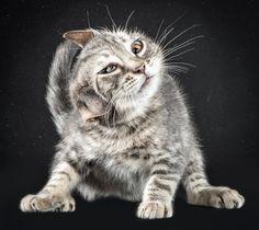 Geschüttelt, nicht gerührt: Diese Katze aus dem Tierheim ist eine von mehr als...