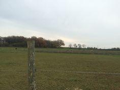 View fields