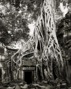 """from the book: """"Ancient Trees: Portraits of Time"""" by San Fransisco photographer Beth Moon. She has been searching out the earth's largest and oldest living monuments in the most remote locations for the last 14 years. Tree Woman, Old Trees, Tree Photography, Photography Magazine, Digital Photography, White Photography, Photography Tips, Tree Forest, Natural World"""