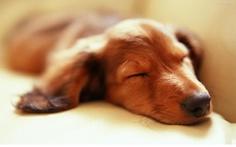 Día 178: #RT si también #Amas el ir a #Dormir y #Descansar - #TeamLife