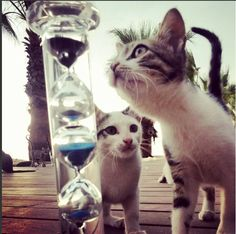 Hourglass 75 and cats - Tall glass transparent Hourglass on the beach with cats on Hourglass Collection - MHC Virtual Museum about Time and Space relations.