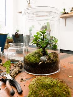 Make your house greener - with a terrarium Make your own biotope - You . : Make your house greener - with a terrarium Make your own biotope - You . Mini Terrarium, Terrarium Plants, Glass Terrarium, Succulent Terrarium, Moss Garden, Succulents Garden, Diy Garden, Deco Nature, Plants Are Friends