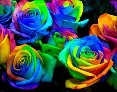 Rainbow roses, you can do this by splitting the stems into strands and placing each one in food colouring the roses draw the liquid colouring into the petals, amazing!