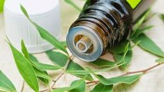 Tea Tree (Melaleuca) Essential Oil Uses & Benefits Skin Tag On Eyelid, Skin Tags On Face, Oils For Dandruff, Melaleuca Essential Oil, Essential Oil Uses, Skin Tags Home Remedies, Tea Tree Oil For Acne, Toenail Fungus Remedies, Natural Treatments