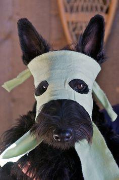 Ninja-Scottie. Corgis are still better John but this is pretty cute.
