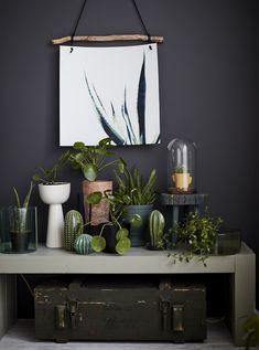 Flere planter på et bord.