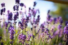 calmimg flowers