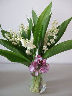 each 1st of may, you offer the people you like very much these flowers. it is supposed to bring them luck ;-))