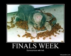 College finals week. Haha, this is how I felt after being up for 4 days straight this week. I finally got the sleep of my life on Friday night though :)