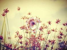 wild flower ดอกไม้ป่า Free images , Free photo - Free images , Free Photos , Free Pictures , รูปภาพฟรี - imagesthai.com royalty-free stock images ,photos, illustrations and vector