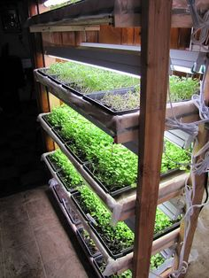 Have you heard of aquaponics? Aquaponics Combines the Growing of Fish and Plants You may grow plants in water and without soil and once one does this together with growing fish you are practicing aquaponics. Indoor Farming, Organic Farming, Indoor Gardening, Aquaponics System, Culture Bio, Growing Microgreens, Agriculture Farming, Urban Farming, Urban Gardening