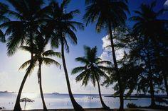 Beach, Nassau (The Bahamas)