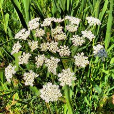 Es una flor silvestre. Las hay a cientos por la zona de San Felipe. Pero no se cómo se llama