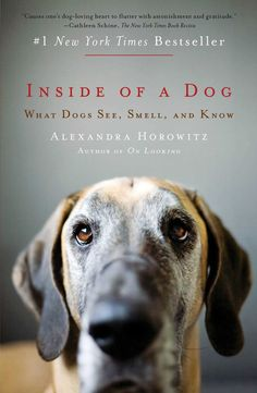 """How a Dog Actually """"Sees"""" the World Through Smell 