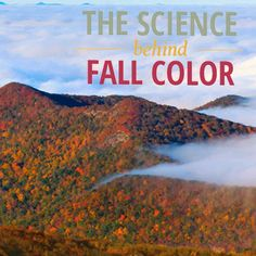 The Science Behind Fall Color Nc Mountains, North Carolina Mountains, Blue Ridge Mountains, Ashville Nc, Autumn Leaf Color, Myrtle Beach South Carolina, Cozumel Mexico, West Florida, Blue Ridge Parkway