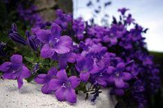 اّ ه  http://www.purplerose.ca/
