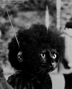 Afro cat!