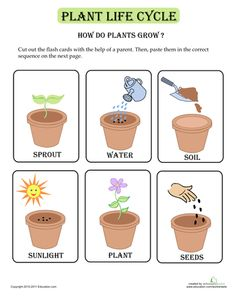 Imgs For > Parts Of Plants Worksheet For Preschool
