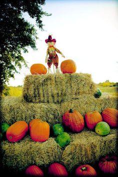 Garner Ranch Pumpkin Patch Chico - applicationbright