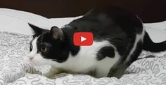 Click to see a kitty that has all the right moves!