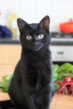 This cat looks amazingly like our Spooky. The face, the look on his face, or do all black cats just look alike? Nah, we've got two and they are way different. This must be Spooks doppleganger.