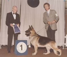 In the Dog House by Simon Parsons #dogs #dogshows #dogshowing #GSD