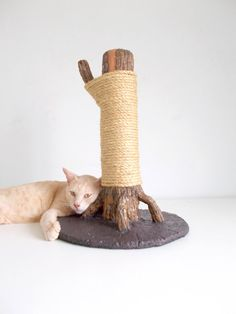 DIY Cat scratcher Scratching Tree using real wood & all natural materials.... simple cement base?