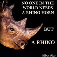 Save the rhino from extinction