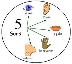 Les cinq sens (the 5 senses) - Le jardin d'Alysse French Language Lessons, French Lessons, French Teacher, Teaching French, La Promenade De Flaubert, French Body Parts, French Proverbs, French Practice, French For Beginners
