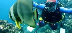 Mergulho em Okinawa, Japão. Coral Diving apresenta o famoso ponto Maeda.