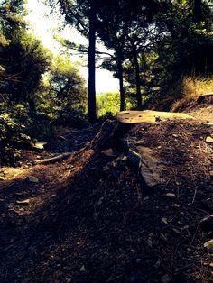 Un bel salto nel bosco di Diano San Pietro!! LIGURIA