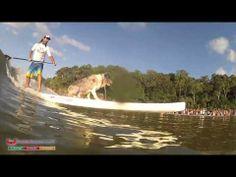 ▶ Surfing Dog Spectacular Noosa, Australia - YouTube