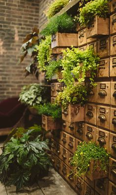 Card Catalog Living Wall Libraries don't have to be stuffy (although who doesn't love the sm Indoor Garden, Indoor Plants, Outdoor Gardens, Dream Garden, Home And Garden, Plantas Indoor, Deco Champetre, Asparagus Fern, Room With Plants