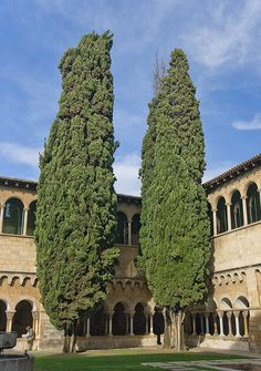 El claustre de Sant Cugat / The cloister of Sant Cugat