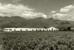 KWV Cellars, Paarl. late 40's   One of the largest wine cell…   Flickr