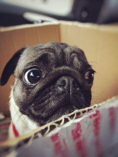 眼神好口愛啊 在紙箱裡乖乖噠