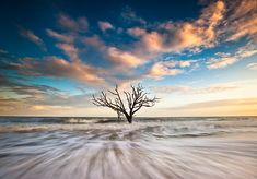 Alone - #Charleston South Carolina #landscape #photography by Dave Allen www.daveallenphotography.com