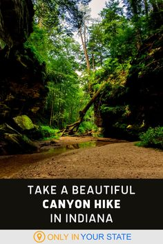 Take a short, easy, and beautiful hike in Indiana that takes you through a lush emerald green canyon. This trail is fun, scenic, and beginner and family-friendly. It is best for older kids as you will need to climb a ladder.