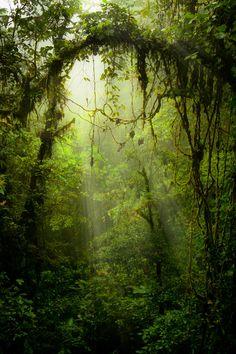 The Greenman, Cernunnos /Herne the Hunter... Nature's s Doorway... By Artist Unknown...