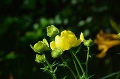 Kulleron keltainen