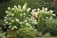 Lecę w kulki...: Jak przycinać hortensje bukietowe ? Deck Enclosures, Garden Design, Landscape, Plants, Landscape Designs, Plant, Landscaping, Yard Design, Planting