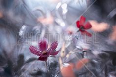 Another Flower, another Story - Canvas Print & Canvas Art - Photowall